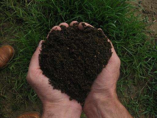 Las hierbas y la tintura de los parásitos