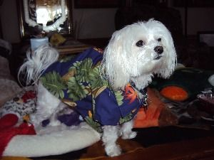 Aloha Doggie Collars and Leashes - Home of Poi Dog Products of Hawaii